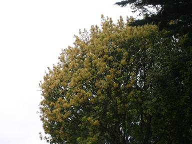 A tree after rainy season.