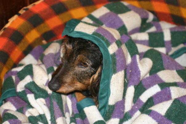 Ollie huddled under his blanket.