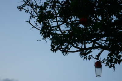 A solar lantern hanging from the boughs of a tree.