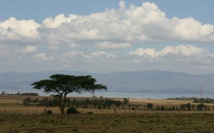 An acacia tree with Lake Naivasha in the background.