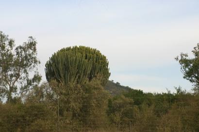 The bush terrain around Restart is alluring in it's own way.