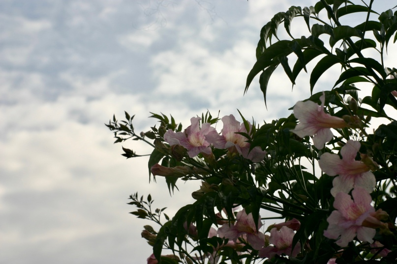There are so many beautiful flowers around the campus of Restart.