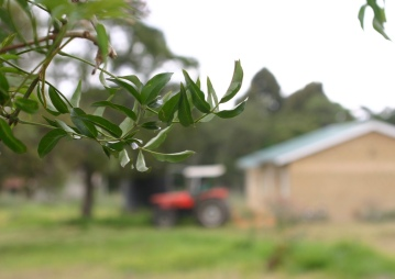 Restart Africa also features a medicinal plant project in which the knowledge of healing herbs is preserved.
