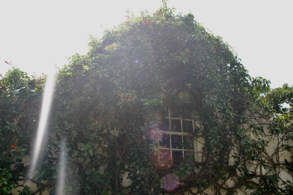 Mary's house, drenched and caressed by vines and indigenous flowers.