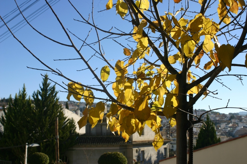 A golden tree in the morning sun.
